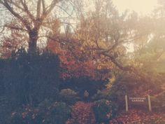 Shakespeare Garden, International Rose Test Garden. Portland.