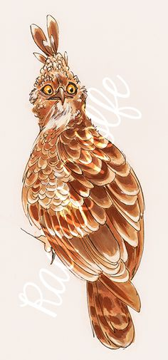 Day 17 - Changeable Hawk Eagle (Crested Hawk Eagle)