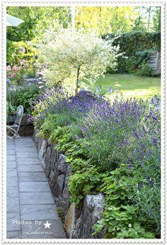Kivimuuripenkki ja mansikkaistutus Dream Garden, Home And Garden, Permaculture, Landscape Design, Garden Design, Alpine Garden, Garden Projects, Garden Bridge, Garden Inspiration