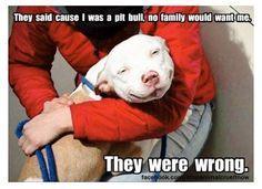Pitbull love!