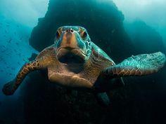 Beautiful Sea Turtles under-the-sea