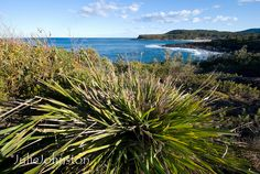 Looking towards Merry Beach, South Coast, NSW | Flickr - Photo Sharing!