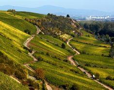 GermanWineEstates - German Wine Regions - Rheinhessen To learn more about #Mainz | #Rheinhessen click here: http://www.greatwinecapitals.com/capitals/mainz-rheinhessen