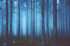 조나 존튼의 숲 사진