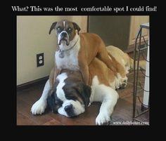 Comfortable Spot www.dailyboxer.com #BoxerDog