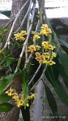 Dendrobium Orchids, Life Is A Gift, Growing Flowers, Glass Vase, Vegetable Gardening, Amazing, Plants, Pictures, Gardens