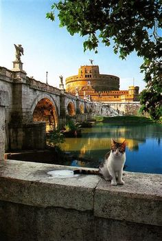 Postcards from Rome: cat poses in front of the Saint Angel's Castle (Castel Sant'Angelo or Castle of the Holy Angel). More postcards from Rome with cats at http://www.traveling-cats.com/2015/04/cats-from-rome-italy.html