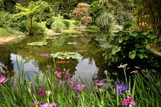 lilies on pond | Lily Pond. Photo courtesy The Huntington Library, Art Collections, and ...