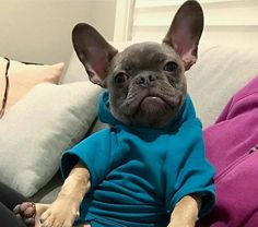 We have the best gift ideas for frenchie lovers. Check out our newest Copy of Cozy Fash...http://thefrenchiestore.com/products/copy-of-cozy-fashionable-dog-hoodie?utm_campaign=social_autopilot&utm_source=pin&utm_medium=pin