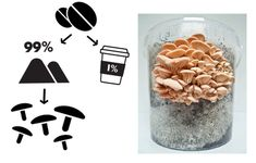 URBAN OYSTER Mushroom Grow Kit, Compost, Oysters, Dog Food Recipes, Stuffed Mushrooms, Urban, Gourmet, Stuff Mushrooms, Dog Recipes