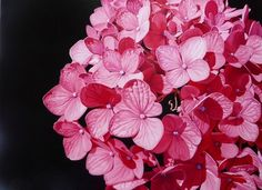 Amber Emm Artworks Available At Black Door Gallery. Photo realistic floral oil paintings with strong contrasting light, depicting the beauty that can be found in our own backyard. Black Doors, Amber, Rooms, Gallery, Floral, Artwork, Flowers, Plants, Painting
