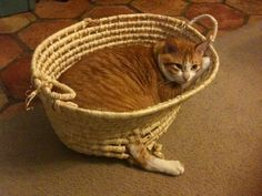 Don't you just hate when your basket has a blow out???  LOL