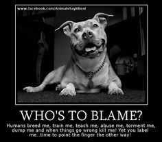 There is no such thing as a bad dog. Just bad owners.