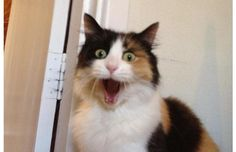 23 Hilarious Photos Of Pets Who Weren't Expecting You Just Yet (Slide #32) - Pawsome