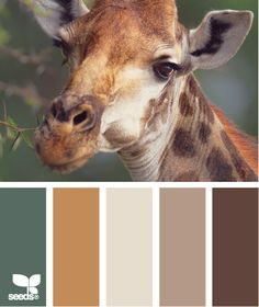 giraffe tones what a gorgeous nursery these colors would make for a baby boy!  Fill the room with pictures of Giraffes!  How tender would that be?