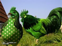 St. Patty's Day Roosters...ha!