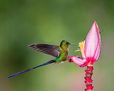 Free Latest WhatsApp DP Images Pics Wallpaper Photo , WhatsApp DP Images Picstures free Downlaod Most Beautiful Images, Beautiful Birds, Buckeye Butterfly, Banana Flower, International Quilt Festival, Whatsapp Dp Images, Close Up Photography, Wild Creatures, Photo Competition