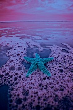 starfish turquoise in a purple sea? I love this color combination and the color of the starfish! Summer Of Love, Summer Fun, Summer Time, Summer Beach, Ocean Beach, Beach Bum, Ocean Waves, Summer Days, Fish Ocean