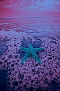 Starfish. #milan #Expo2015 #WorldsFair