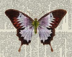 butterfly vintage artwork printed on old Dictionary page, by FauxKiss , Etsy