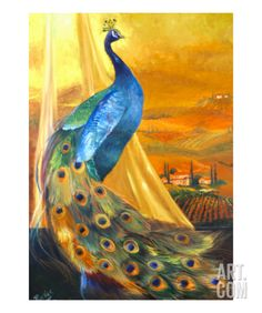 Tuscan Peacock Stretched Canvas Print by Mary Rucker at Art.com