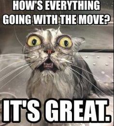 Don't let moving stress you out! Call us for help today! Moving Humor, Moving House Quotes, Moving Company Quotes, Moving Stress, Moving Day, Geocaching, Weird Beds, Stress Humor, Elderly Activities