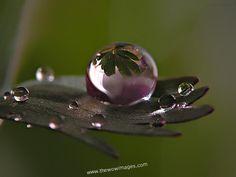 beauty of rain drops