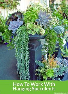 How to work with hanging succulents without all the leaves falling off. This method works especially with popular succulents like String Of Pearls, Burro's Tail Sedum, Fishhooks Senecio & Hanging Jade.