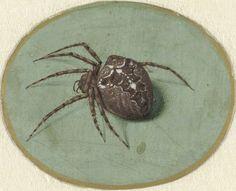 MINIATURE - Jan Augustin van der Goes | Spider (1690) ( 41 x 51 mm) - Rijksmuseum Amsterdam