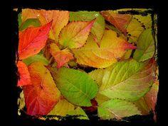 Herbstblätter von Gerda Knauer