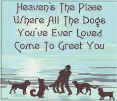 Shadow, Lakota, Keke, Duchcess. Love and miss you fur friends! Untill we meet again <3