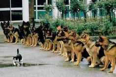 Now those are well trained military dogs