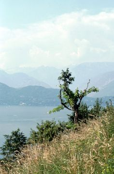 https://flic.kr/p/JKiCge   Caviano, Ticino, Svizzera