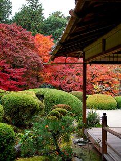 紅葉 - 詩仙堂 丈山寺 / Shisendo - Jyozan-ji Temple Love the tall red maples as the back ground and manicured green bushes in the front. Nice contrast!
