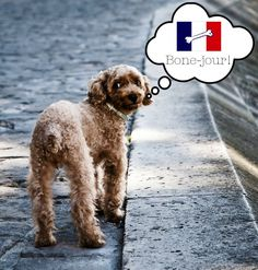 Discover the #Expat #Dog's #Guide to #Paris and learn what this city offers your best four-legged friend.