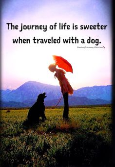 Dogs: The journey of life is sweeter when traveled with a dog. ❤