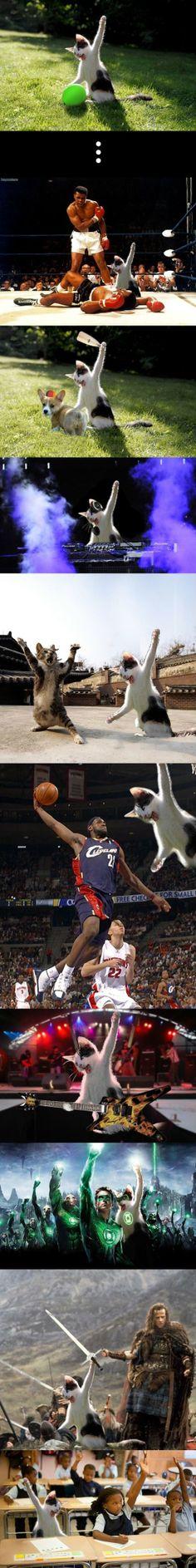 Cat Killing The Balloon - www.meme-lol.com