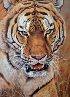 Alan M Hunt Wildlife Artist Probably the best painter in the World BBC Wildlife of the Year Section Winner 2010 Artist of animal paintings portraits Big Cats