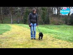 Comment apprendre à votre chien à marcher au pied - YouTube Dressage, Mens Sunglasses, Aide, Animals, Pearl, Dogs, Poodle, Dog Furniture, Stuff Stuff