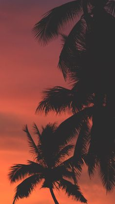 Sunset is the sunset in the afternoon. That time is beautiful scenery. We will present an article about sunset quotes love. Whats Wallpaper, Summer Wallpaper, Beach Wallpaper, Tree Wallpaper, Iphone Background Wallpaper, Scenery Wallpaper, Orange Wallpaper, Wallpaper Quotes, Sunset Pictures