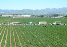 Irvine, CA Strawberry Fields - A lot of people seem to forget that California has quite a good number of farms. Go Irvine!