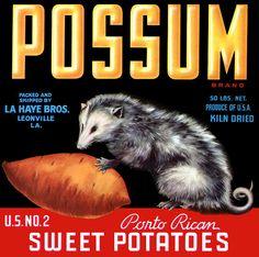 Possum Vintage Leonville Louisiana Yam Crate Label An Original Label 304 Vintage Labels, Vintage Ads, Vintage Food, Vintage Packaging, Vintage Prints, Louisiana, Label Art, Vegetable Crates, La Haye