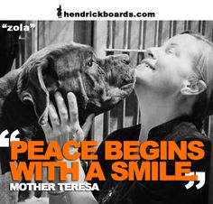 """""""Peace begins with a smile.""""  -Mother Teresa    Peace is something all animals deserve. Please join the fight with us to give all these beautiful animals a chance at peace, love and respect...it begins with a smile.    Meet Zola rescue by the amazing Stella's Hope. Share and Save this beautiful animal."""