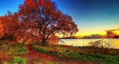 Осень jesień autumn fall