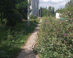 Щекинцы называют новые адреса заросших бурьяном улиц Country Roads