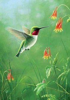 61 Ideas Humming Bird Wallpaper Animals For 2019 Red Hummingbird, Hummingbird Pictures, Hummingbird Painting, Hummingbird Tattoo, Tattoo Bird, Images Colibri, Art Colibri, Exotic Birds, Colorful Birds
