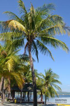 Trees of Coral View Resort in Morong Bataan