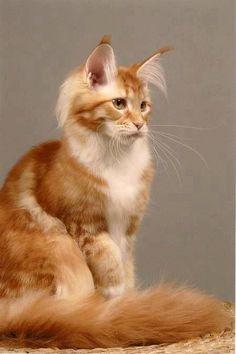 Hairy eared cat!
