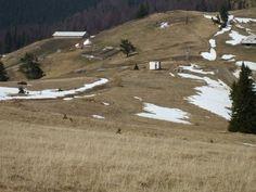 Primăria comunei Borca se luptă pentru recâştigarea a 60 de hectare de păşune situate la graniţa cu localitatea suceveană Mălini, care aparţin de drept localităţii nemţene. Totul depinde însă de sentinţa Înaltei Curţi de Casaţie şi Justiţie şi de o Hotărâre de Guvern.    După 1990, când oamenii din Borca şi-au căutat dreptatea privind o bucată dintr-o păşune situată la graniţa cu comuna Mălini, s-au izbit de refuzul sucevenilor de a o înapoia. Country Roads, Beach, Water, Outdoor, Gripe Water, Outdoors, The Beach, Beaches, Outdoor Games