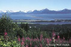 Homer, Alaska with my best friend, Herb running in the fire-weed and enjoying the beauty of this amazing place.